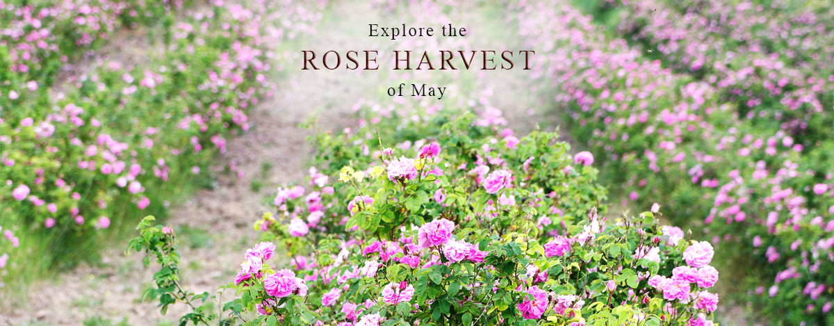 rose-harvest-home-page-2.jpg